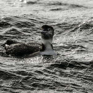 Lahave loon 1